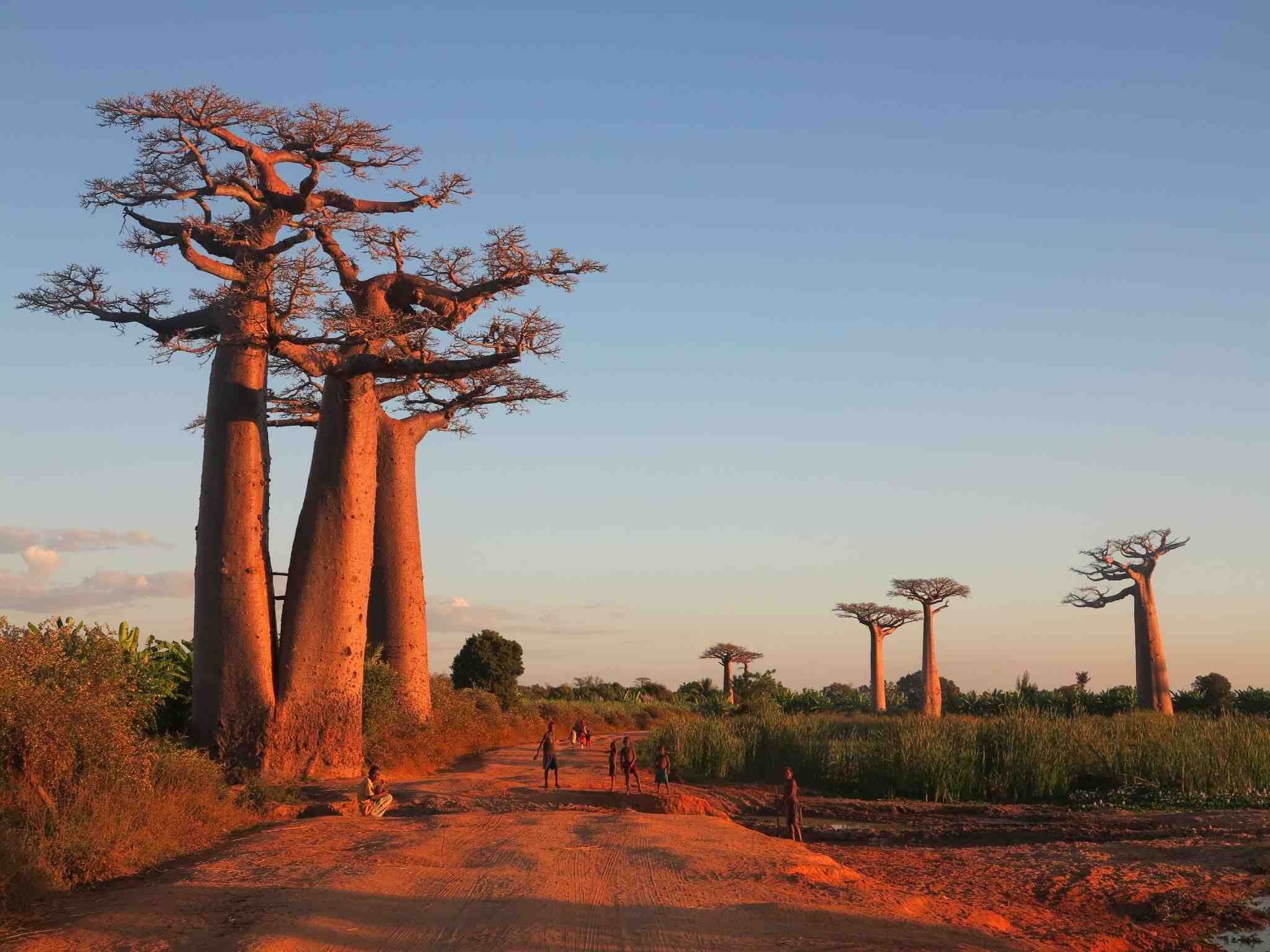 Quel budget pour vivre à Madagascar ?